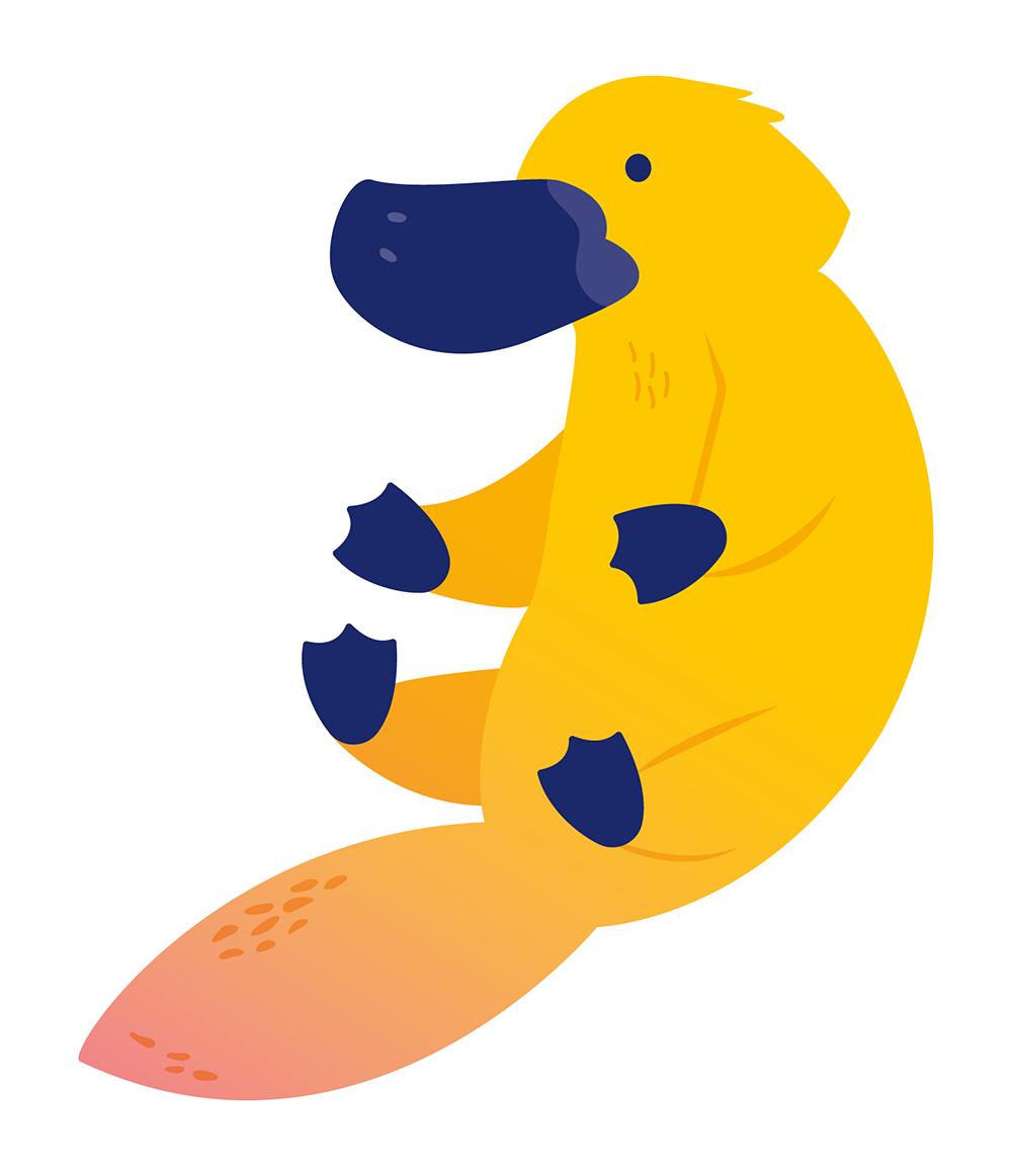 Platypus graphic