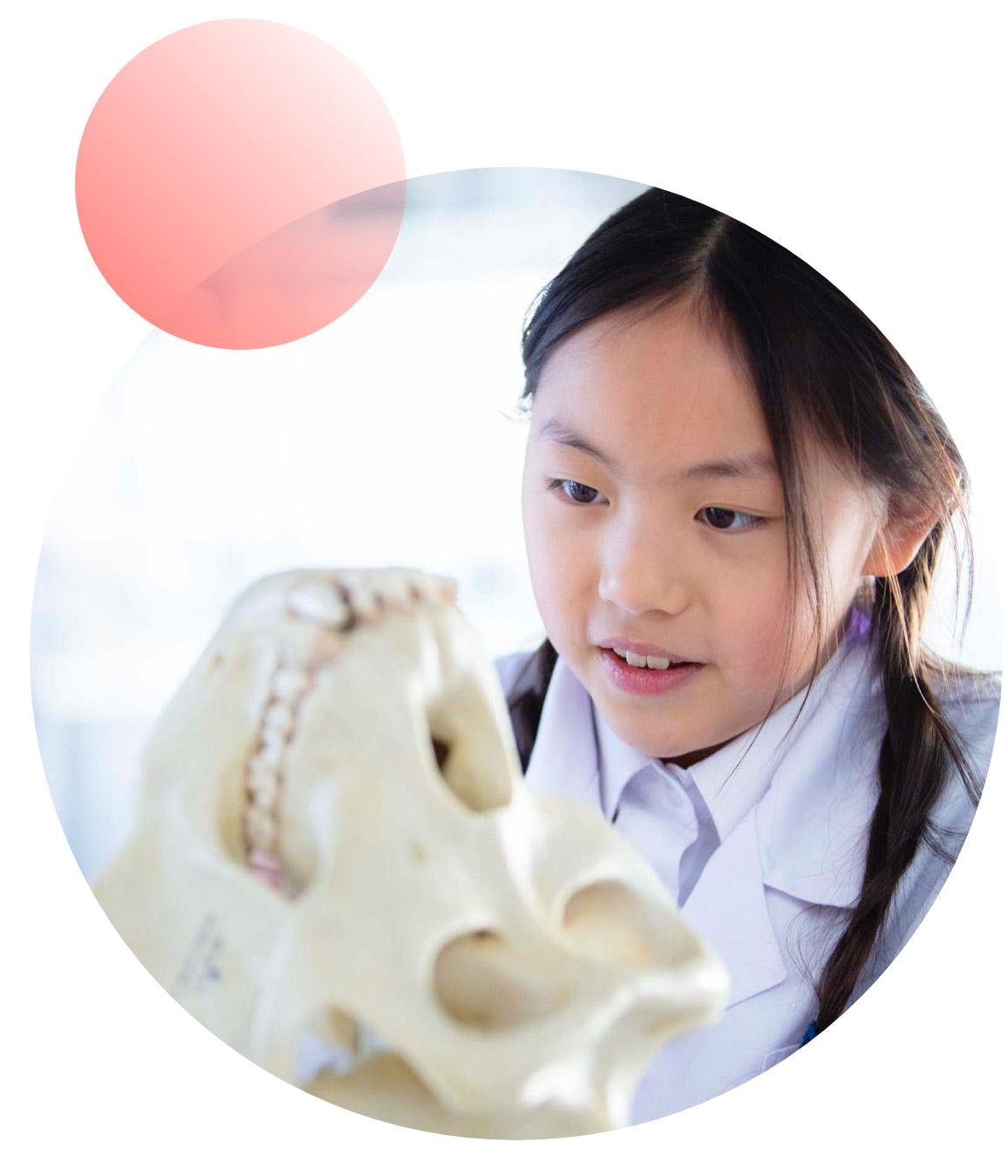 Student examining skull